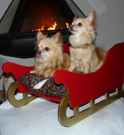 Le rendez vous du FORUM CHIHUAHUA PATTE BLANCHE pour fêter Noel !!!