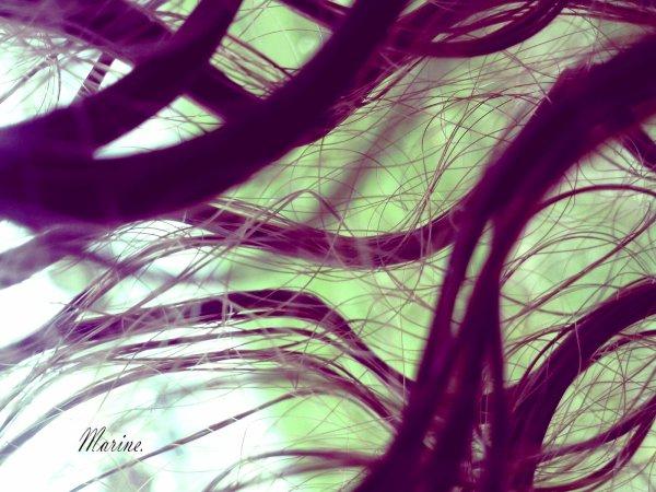 N'oubliez pas que la terre se réjouit de sentir vos pieds nus et que les vents joueraient volontiers avec vos cheveux.