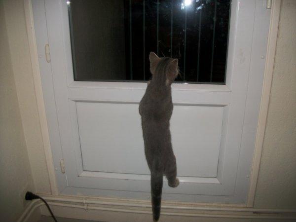 le chat areignée
