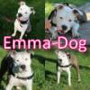 Emma-Dog