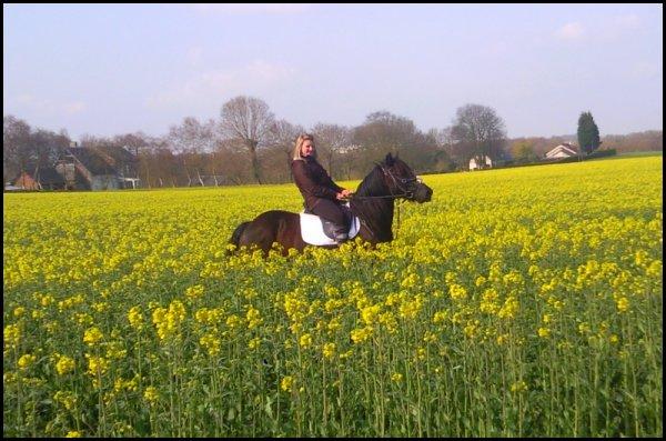 ;   Si un jour je meurs et qu'on m'ouvre le coeur on pourra lire en lettre d'or, je t'aime encor. ♥;    Respecter la nature du cheval.