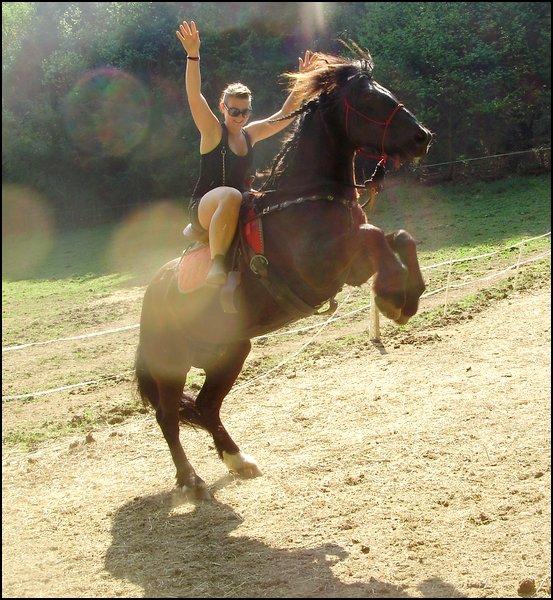 . Le cheval de Merens :).    .