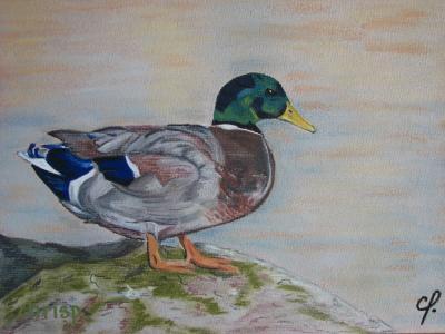 Canard col vert art dessins et peintures for Peinture chambre vert canard