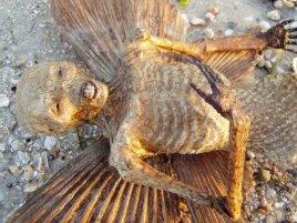 Etrange cadavre