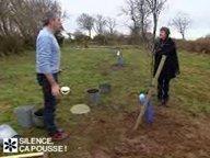 Planter un cognassier  ( Février )
