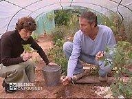 Bouturer les plants de tomate ( Juin )