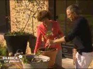 Planter le Physalis alkekengi ( Juin )