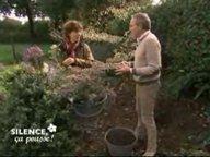 Planter des asters ( Octobre )
