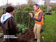 Préparation du pommier à racines nues pour sa plantation ( Décembre )