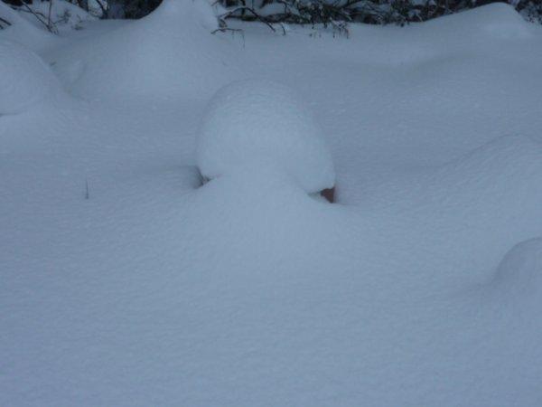 mes ruche extérieur completement sous la neige