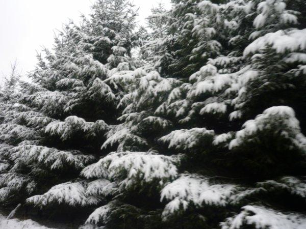 photo d'hiver