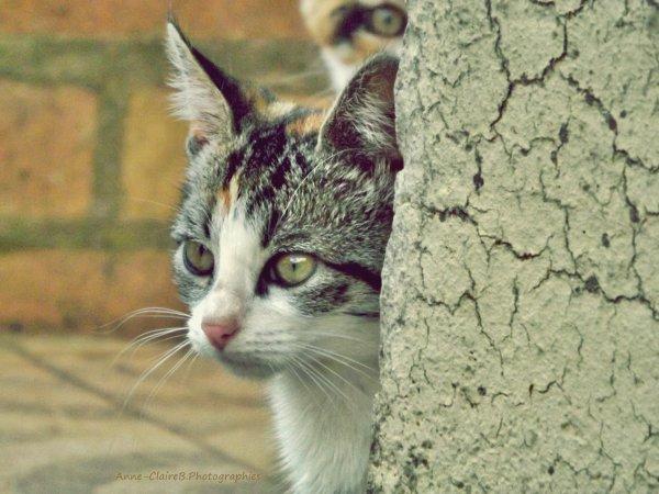 ♛ Cat Power ♛