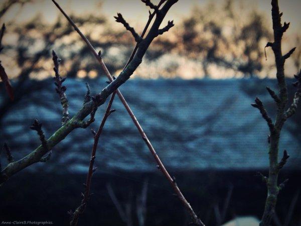 ☃ Winter ☃