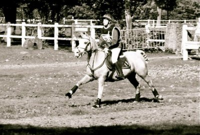 FANDAGO SPONTE, Hongre palomino, 144cm, né en 1993 par RINGO SPONTE et LARA DES MESNULS...