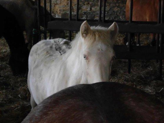 Quelques photos de début décembre à l'élevage.....