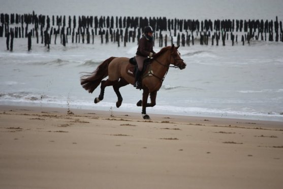de l'air dans les crins, du sel sur les lèvres.....  un galop sur la plage qui grise......
