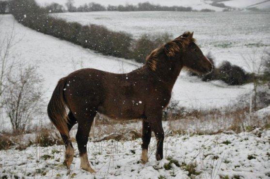 deux photos du très beau BOON BONNY WK le fils de TREVALLION HARLEY (GB) et de LEE LOO DU GRE PFS