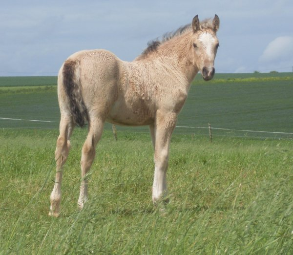 BRUMMEL SPONTE, 1 an, sous un ciel bleu de fin d'hiver....  en atendant la naissance dans quelques jours de petite soeur ou petit frère