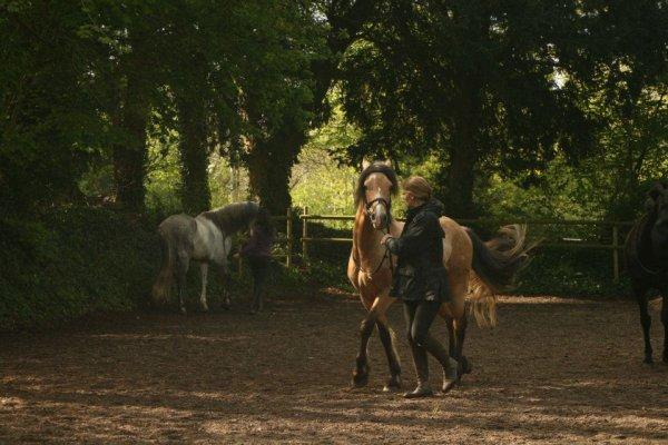 ROMANTIK SPONTE  ( qui fait la monte en Bretagne ) avec Amelie Martin sa propriétaire