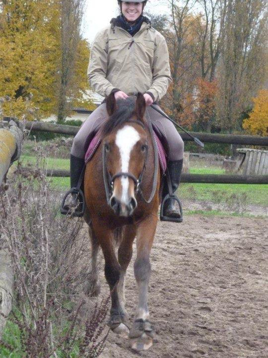 Des poneys ....  cadeaux de Noël de tous les jours !!!