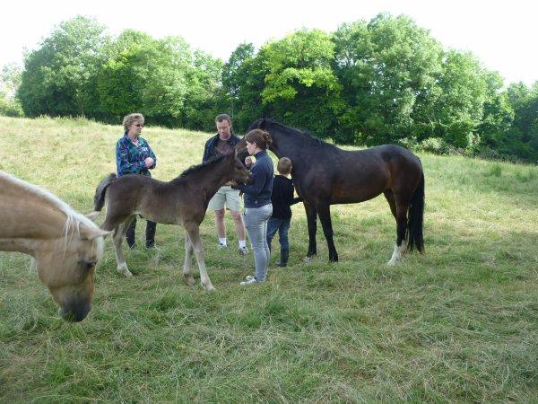 Petite virée à l'élevage .....  Que de bons souvenirs.....  Que de bons poneys !!!!!