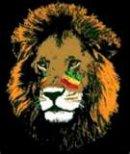 Photo de ThE-lion-0f-GwAda-971