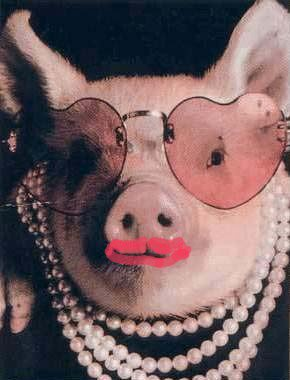 image drole cochon