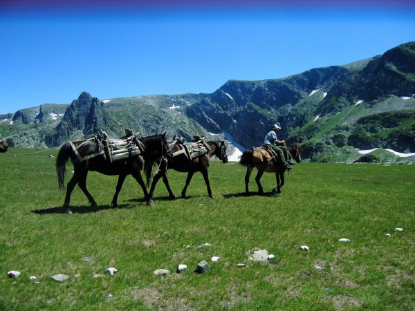 Chevaux de Bulgarie :)