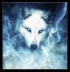 les loup mon animal preferer ^^