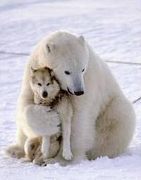 un ours + un chien = coeur