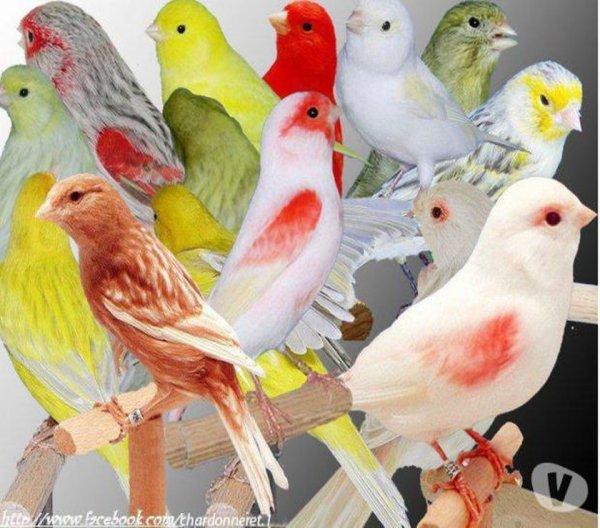 Graneterie animalerie oisellerie  la plume rouge