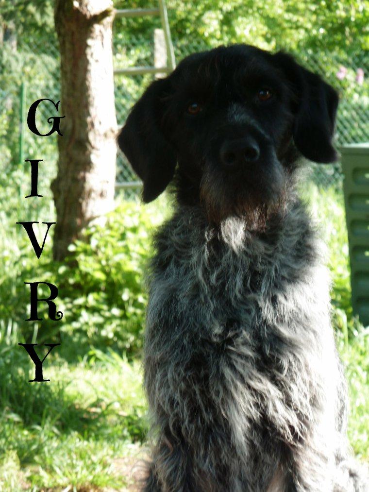 Givry, Un Chien Au Grand Coeur ! .