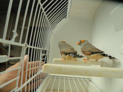 oiseaux 2011