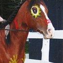 mon cheval c'est le meilleur (2011)