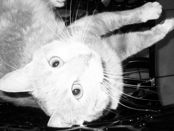 Photos noir & blanche.
