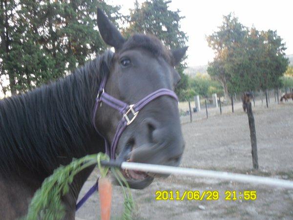 pour tout se qui dise que mon cheval et une MULE