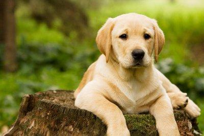 Louer un chien au Japon