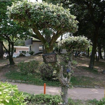 Ubamegashi