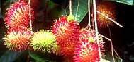 Thaïlande : Les fruits du paradis