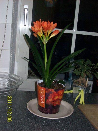 merci a mon grand garcon pour sa belle plante et son petit mots bisou mon grans