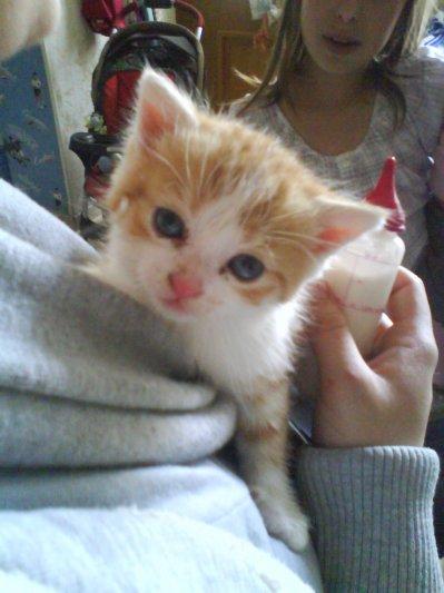 dipssy le chaton a solyane