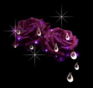 les rose c les plus belle fleur ki peu avoir...