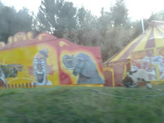 petit reportage univers circus