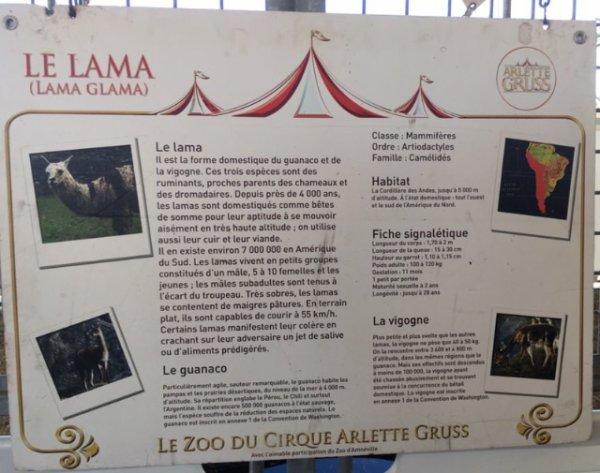 Reportage sur le cirque Arlette Gruss, Partie 5 : Le Zoo (2)