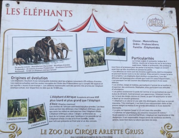 Grand reportage sur le cirque Arlette Gruss, Partie 5 : Le Zoo (4)