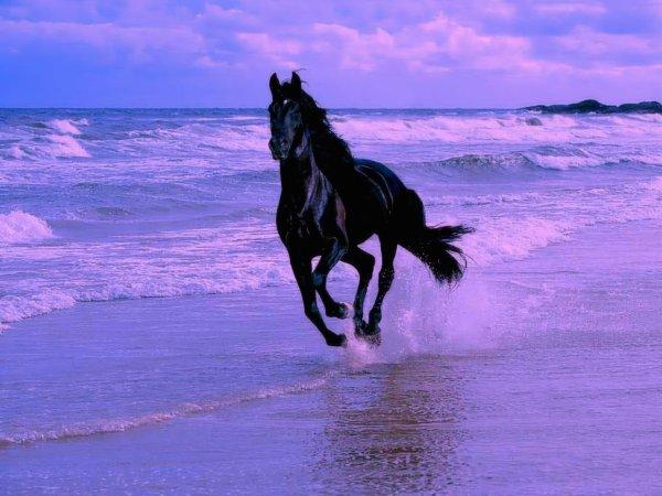J'aimz beaucoup les chevaux