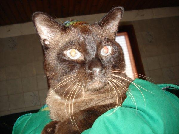 mon chat Adn