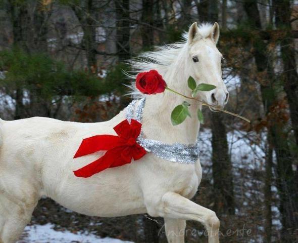 qui veulle ma rose