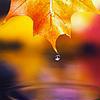 Kaalis Theme l Fall of autumn leaves  (2010)