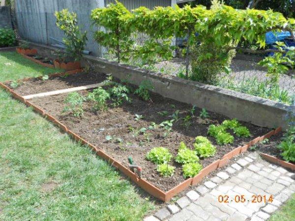 Mon jardin potager avance bien pour un amateur mon blog for Blog jardin potager